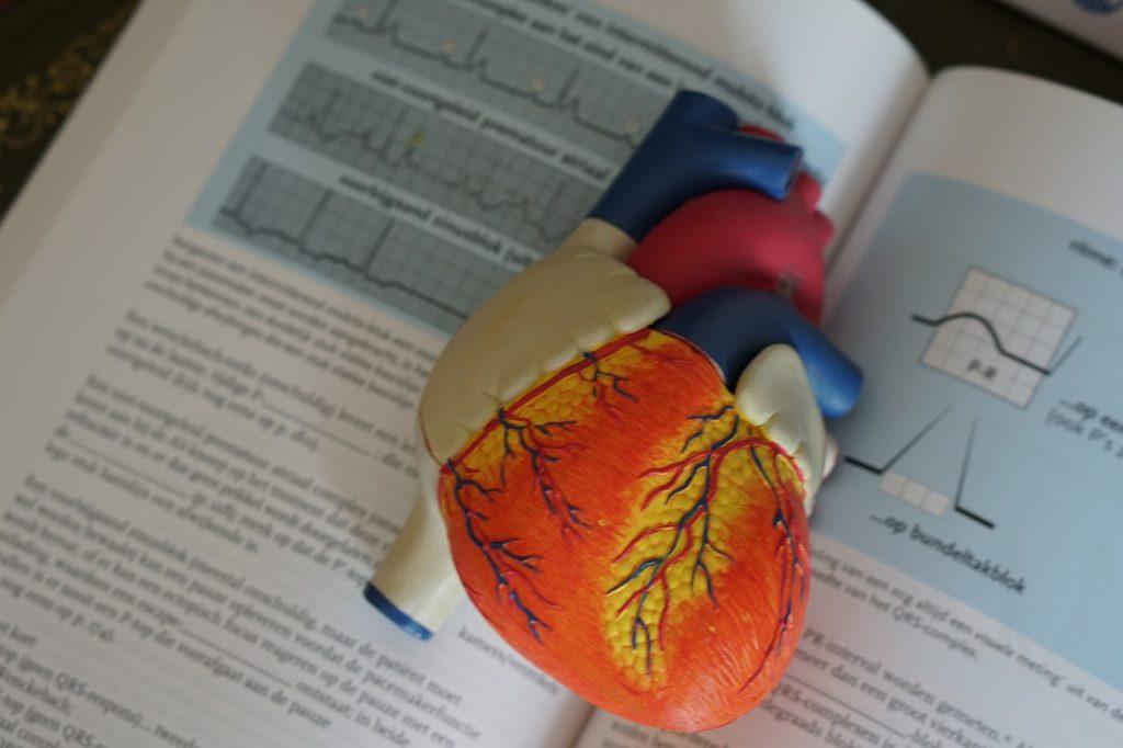 心臓から出た血液が体内を循環する動脈血と静脈血の違い