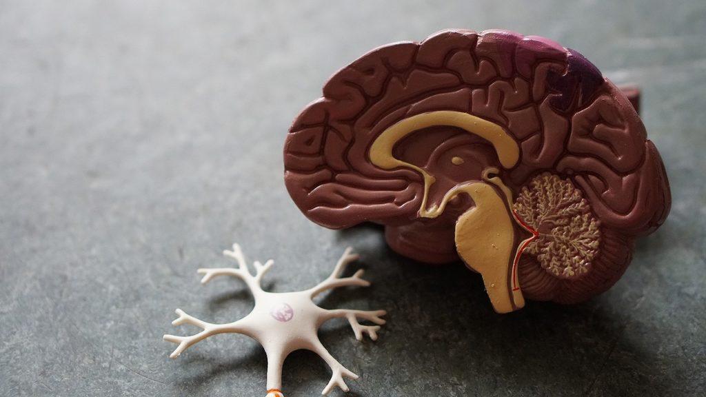 労働生理「神経系」の最初のH2画像