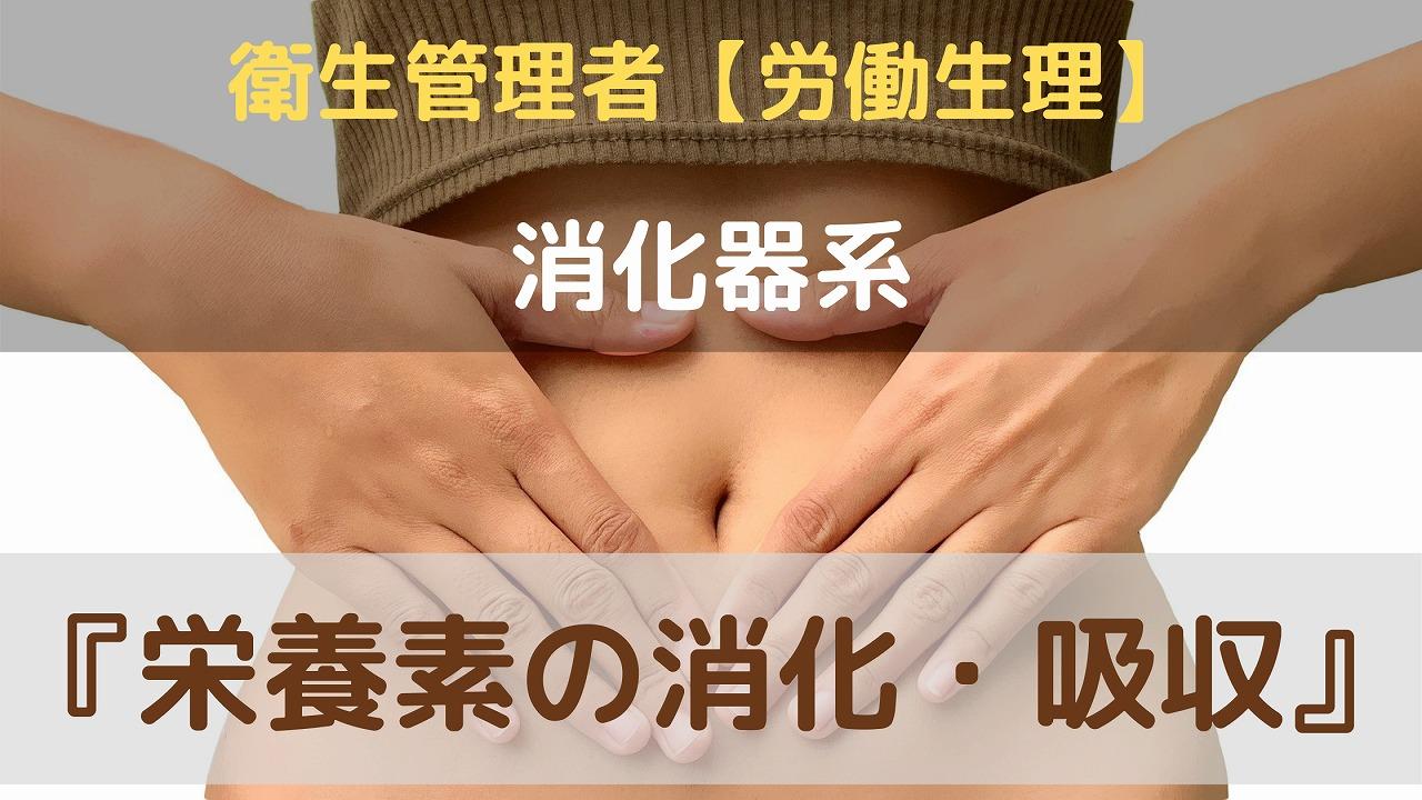 栄養素の消化、吸収について